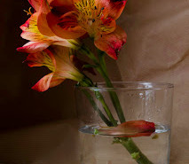 Salón de Primavera 2012. Trofeo. Rosa Marco